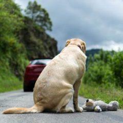 Cani abbandonati, l'uomo la bestia peggiore