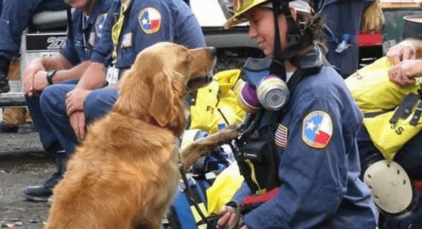 L'America celebra i cani-eroi dell'11 settembre